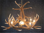 Elk Six Antler Chandelier w/ 1 Down Light - SALE